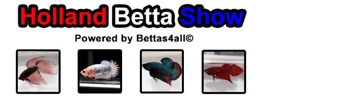 Holland Betta Show 2018